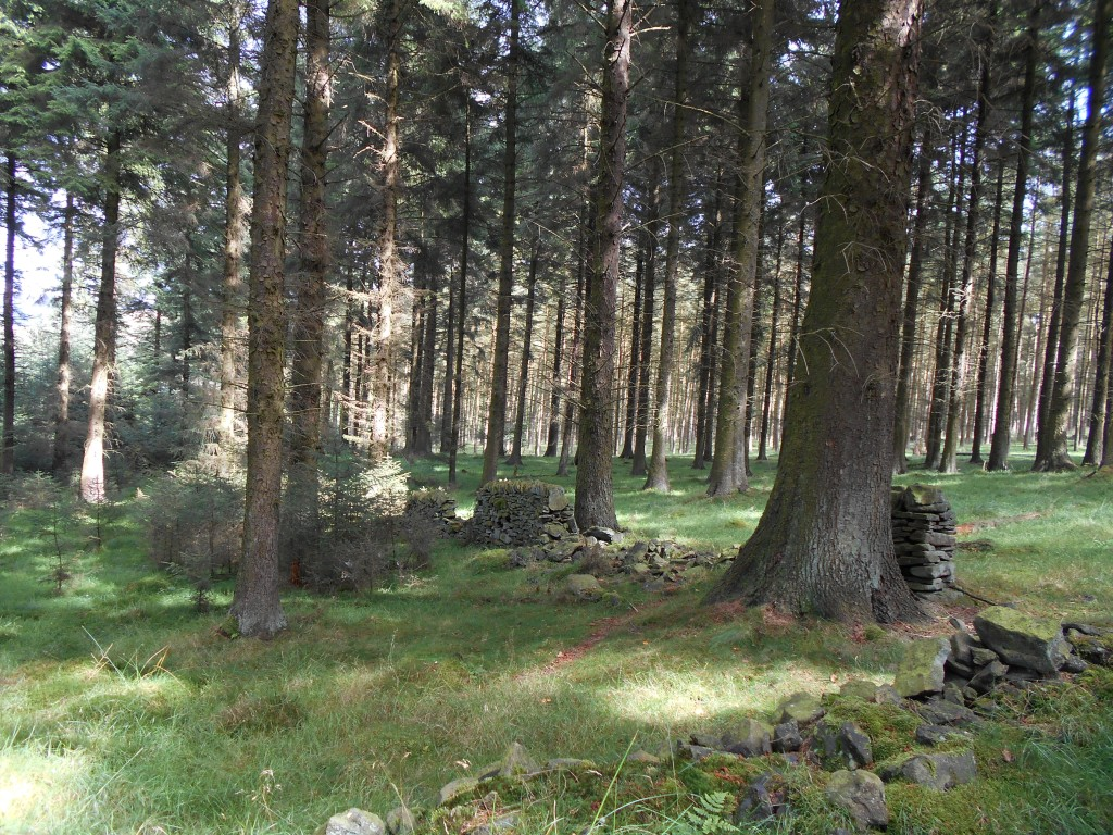 I find the dry stone walls that pre-date the pine trees in the woodlands quite intriguing..